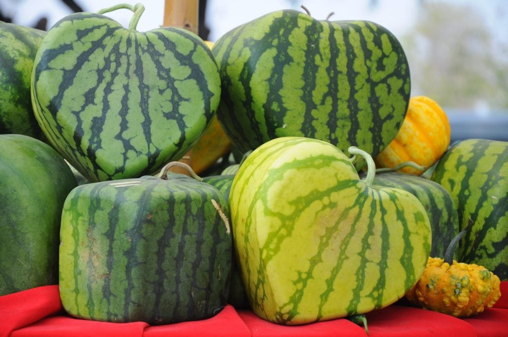 square and heart shaped watermelons